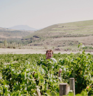 beaumont-wines-blok-1_Tekengebied 1