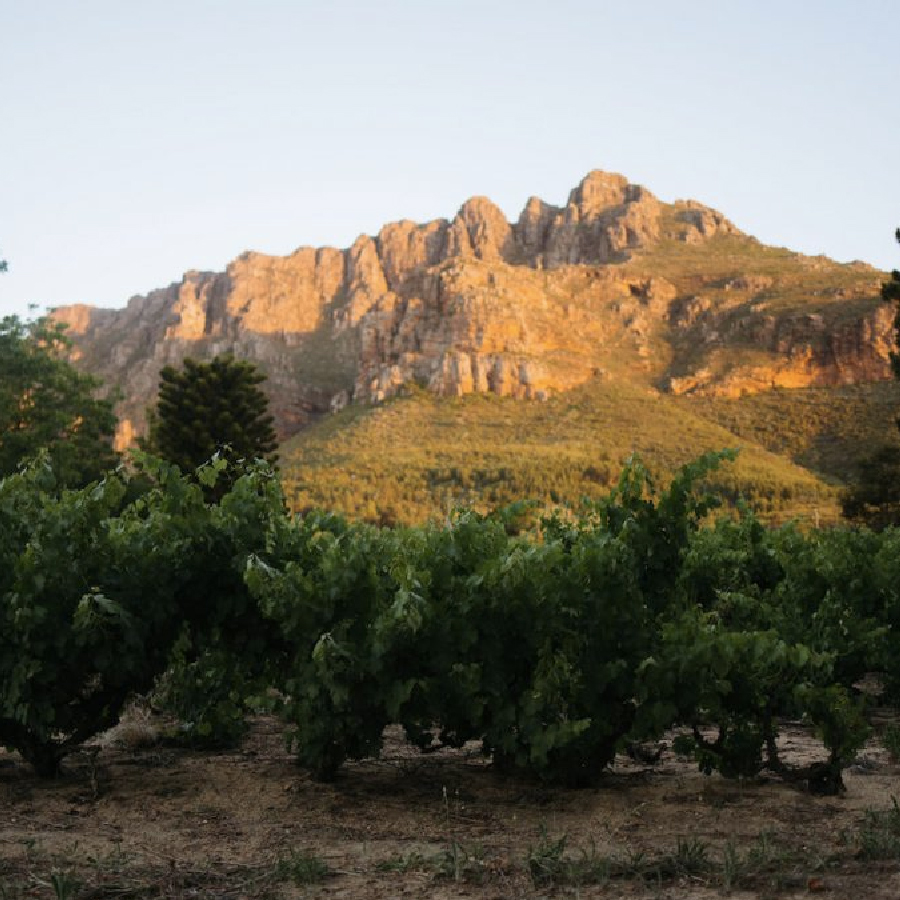 loggerenberg-wijngaarde
